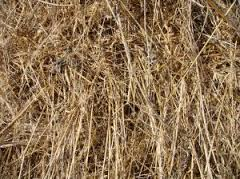 dry grass for biopellets